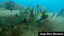 Búvárok szabadították ki az elhagyott halászhálók fogságából a korallokat Thaiföldön.