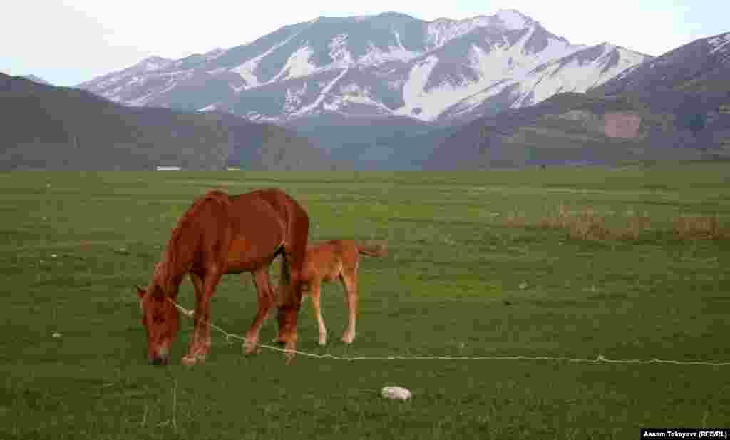 Ақсу-Жабағылы қорығында жайылып жүрген жылқы. Бұл қорық Орталық Азиядағы ең көне де ауқымды аумақты алып жатыр. Бірнеше күнге созылатын саяхатқа көбінесе атпен шығады.