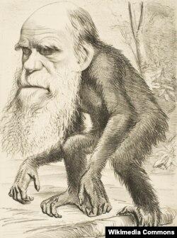 Британская карикатура на Дарвина и его теорию. Сатирический журнал The Hornet. Автор неизвестен. 1871