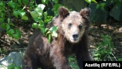 There are an estimated 18,000 bears in Kamchatka Province.