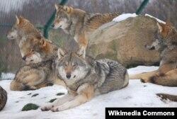 Canavarlar
