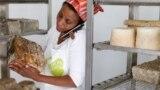 Как мигрантка из Эфиопии ведет в Италии бизнес по производству козьего сыра