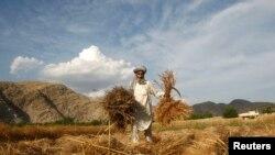 یو افغان بزګر