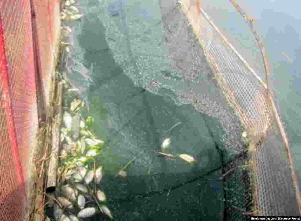 به گفته رییس اداره محیط زیست شهرستان ری، فاجعه ای زیست محیطی در سد فشافویه صورت گرفته است