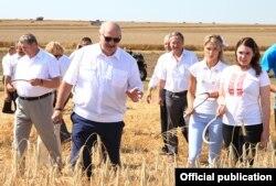 Ілюстацыйнае фота. Аляксандар Лукашэнка зь сярпом у ААТ «Александрыя», жнівень 2017 году