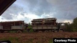 Грузовики вывозят лес. Фото: proural.info