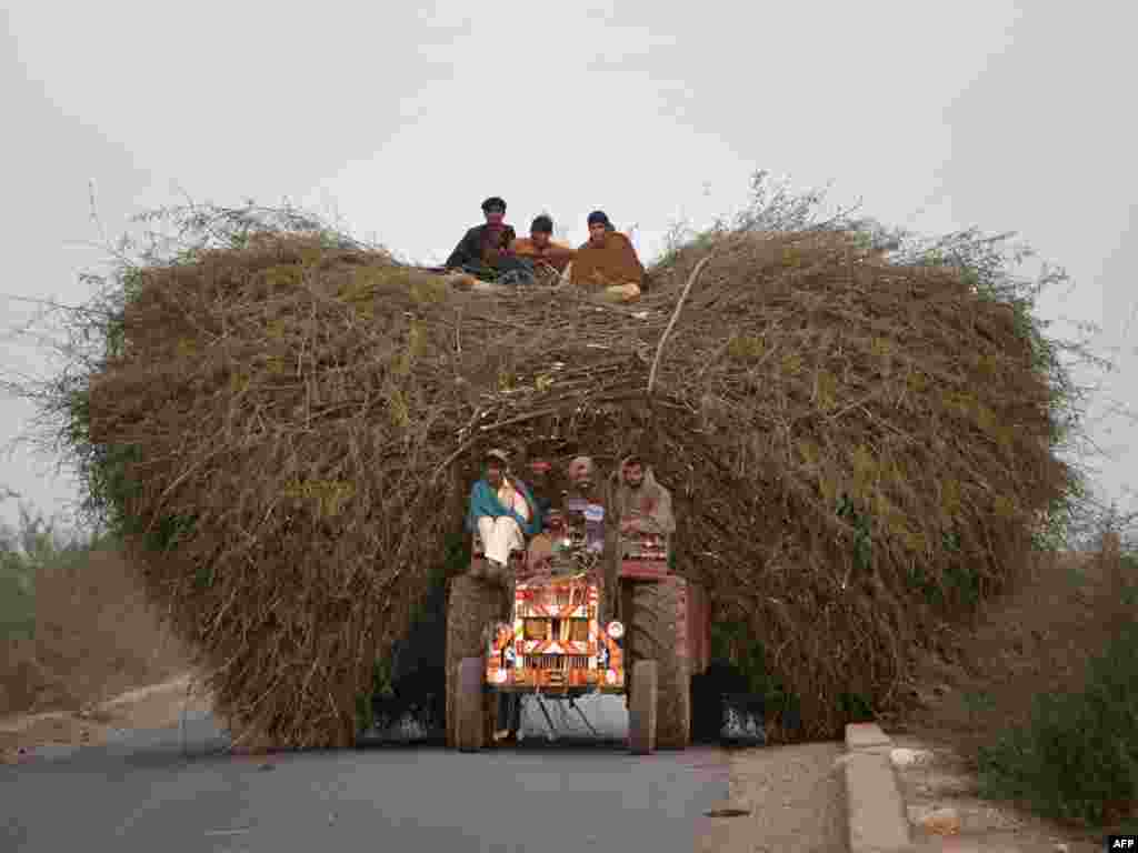 Pakistani farmers ride a tractor loaded with hay to the town of Khewra, south of Islamabad. - Photo by AFP