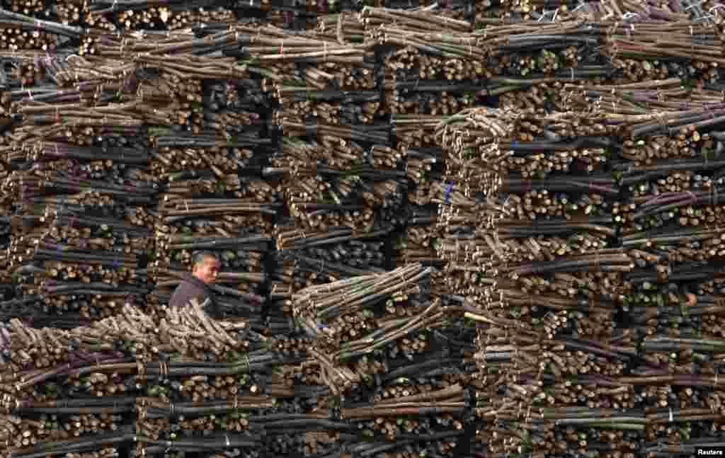 A worker walks past piles of wood at a wood processing factory in Huaibei, Anhui Province, China. (Reuters)