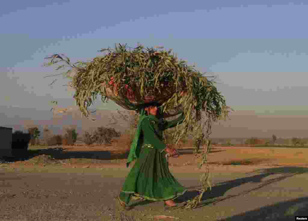 An Afghan woman carries a sack of grass on her head along a road in Nangarhar Province on December 2. (Reuters/Parwiz)