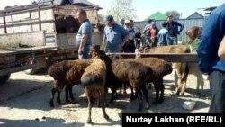 Овцы на рынке в селе Жетыген. Алматинская область, 19 мая 2019 года.