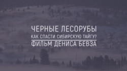 Хранители Сибири: Черные лесорубы. Как спасти сибирскую тайгу?