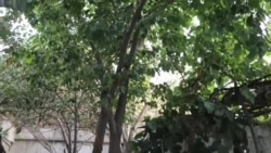 سوسن او شعیب د واده مختصر مراسم درلودل