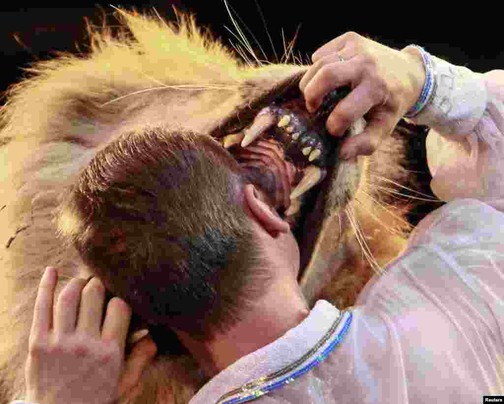 Lion tamer Oleksiy Pinko puts his head into a lion's mouth in a Kyiv circus. (Reuters/Gleb Garanich)