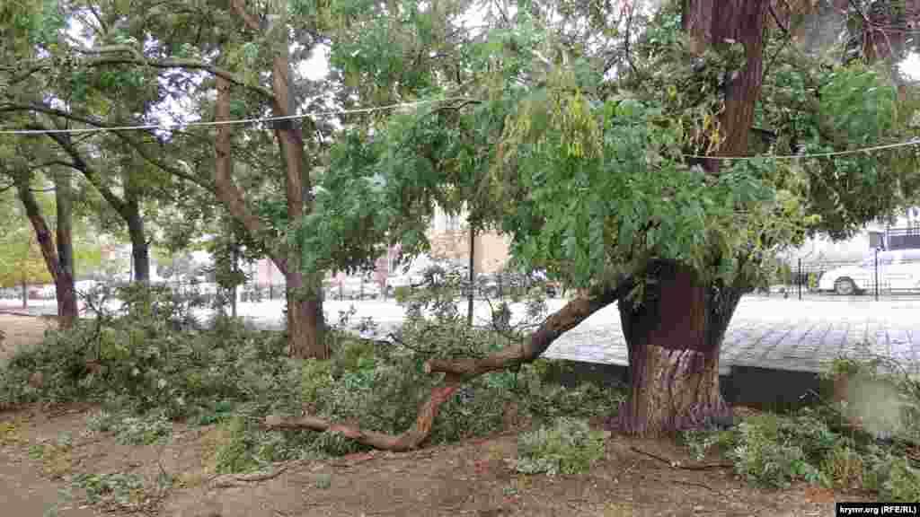 Ветви деревьев падают на линии электропередач, на улице Кирова ветер повалил билборд