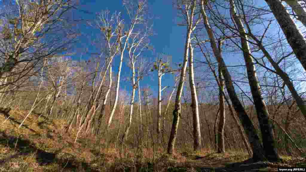 Лес на правом берегу реки Коккозка