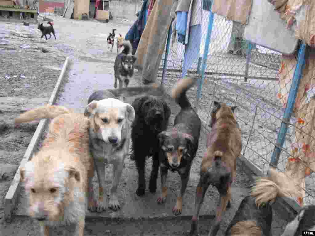 Psi iz azila u Ukrajini