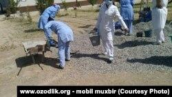 В Узбекистане медицинских работников часто привлекают к работам по благоустройству.