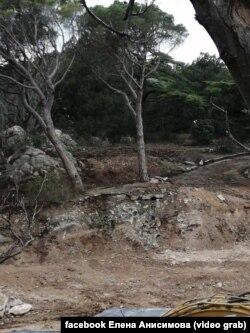 Фороський парк, ушкоджені дерева, березень 2021 року
