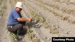 Фермер в Казахстане.