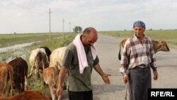 Sabirabad, 12 may 2010