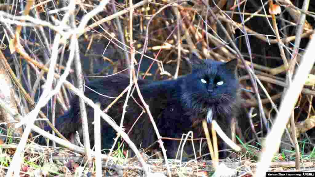 Неподалік в чагарнику блукає чорна кішка