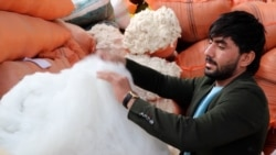 Afghan Recycling Business Brings An Ecological Boon