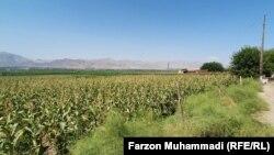 Паҳлӯи ферма