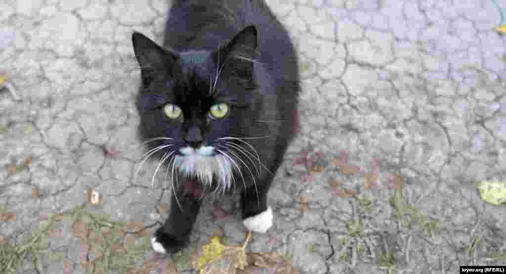 Вилинский черный кот с площади Дроздова