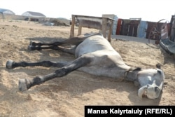 Лошадь едва может пошевелить передними копытами