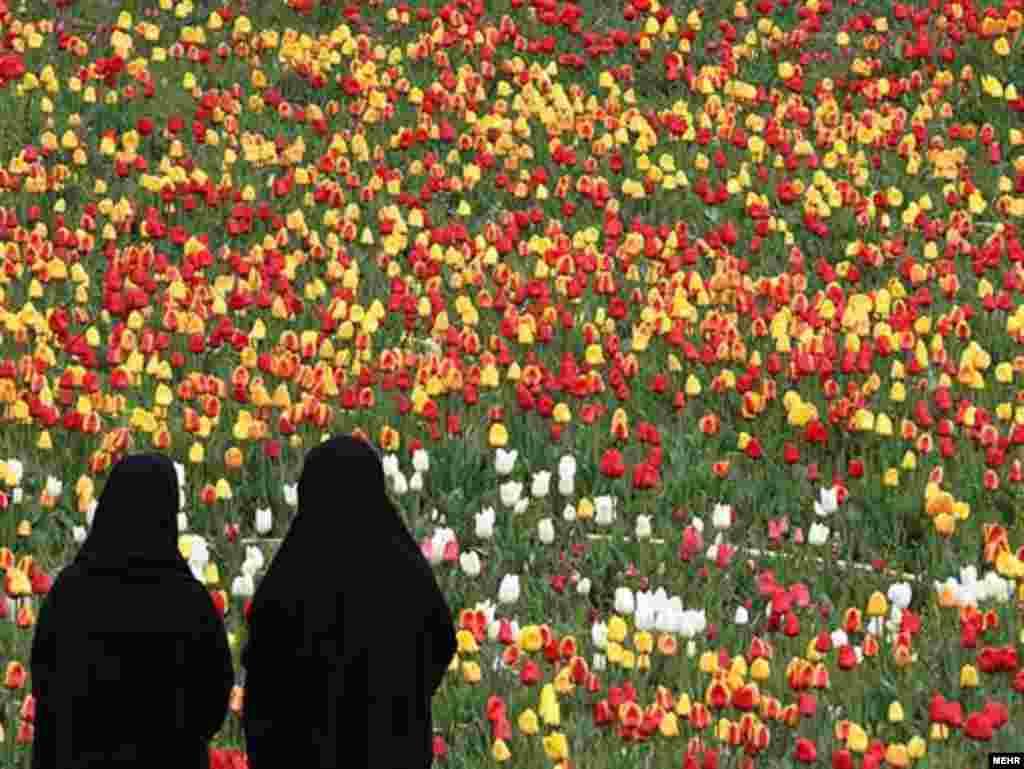 Фэстываль цюльпанаў у Тэгеране