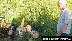 Местный житель Сергей Степанов смотрит на пеньки спиленных деревьев в Нияз-Аюлинском угодье. Осакаровский район Карагандинской области, 13 июня 2013 года