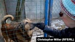 Tamara Trnavska hrani spašene pse u utočištu u okolini Kijeva