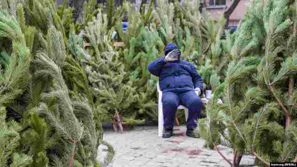 В Феодосиицены на новогодние деревья не отличаются от других регионов