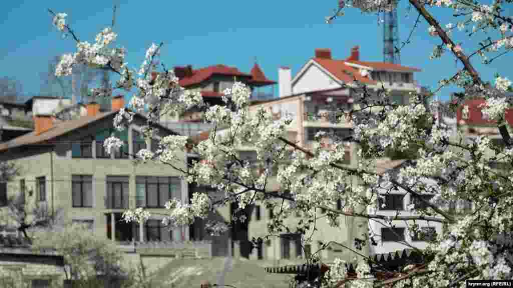 На одному схилі узвозу Котовського зростає алича, а на протилежному «ростуть» нові особняки і міні готелі