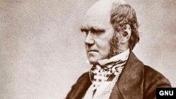 Çarls Darvin