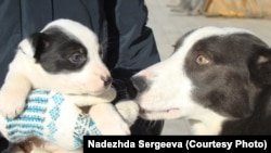 Зорька и ее щенок