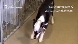 Спасти Андрюшу. В Петербурге пес выжил после ударов топором