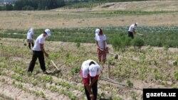Radnici u polju, Uzbekistan