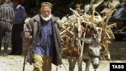 Donkeys are ubiquitous in Tajikistan and are commonly used in rural areas to work fields or to transport produce, firewood, and drinking water. (file photo)