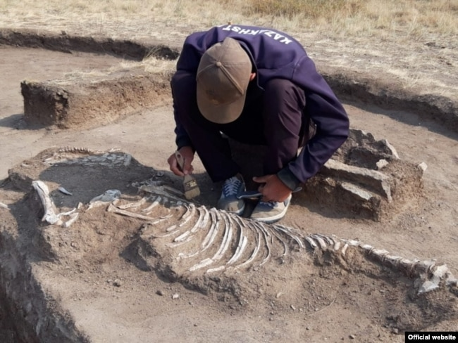 Останки лошади, обнаруженной рядом с парным захоронением в Карагандинской области.