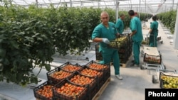 Armenia - Workers at a commercial greenhouse in Ararat province, 19Apr2017.