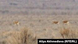 """Национальный парк """"Алтын-Эмель"""". Алматинская область, 30 марта 2012 года."""