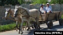 Город Теленешть, Молдова