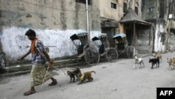 A man in Kolkata, India, walks with his monkeys as they are trailed by stray dogs.