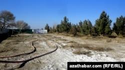 Aşgabat: Agaçlar aýryldy