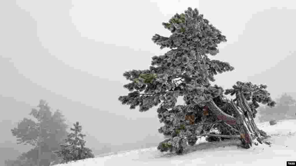 О снежной погоде на Ай-Петри также сообщают на канатной дороге «Мисхор Ай-Петри»