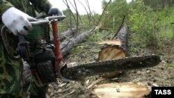 Рубка леса