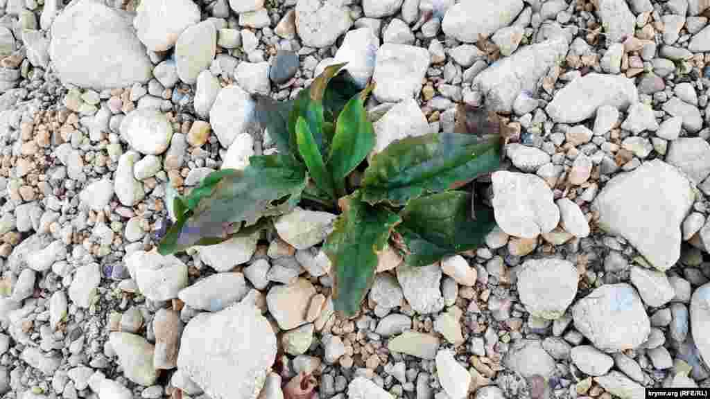 Рослина на висохлому березі