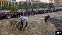 غذا دادن به سگهای خیابانی در استانبول