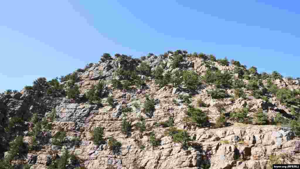 Почти отвесный склон горы Курт-Кая, ее высота 573 метра